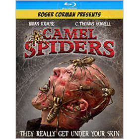 Camel Spiders (US)