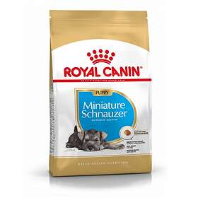 Royal Canin BHN Miniature Schnauzer Junior 1.5kg
