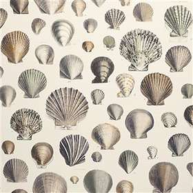 Designers Guild Picture Book Captain Thomas Browns Shells Oyster (PJD6000/02)